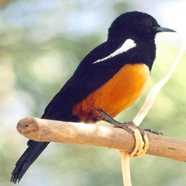 Birding Ethiopia Tours