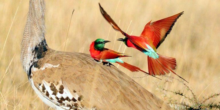Ethiopia-birding-tour4