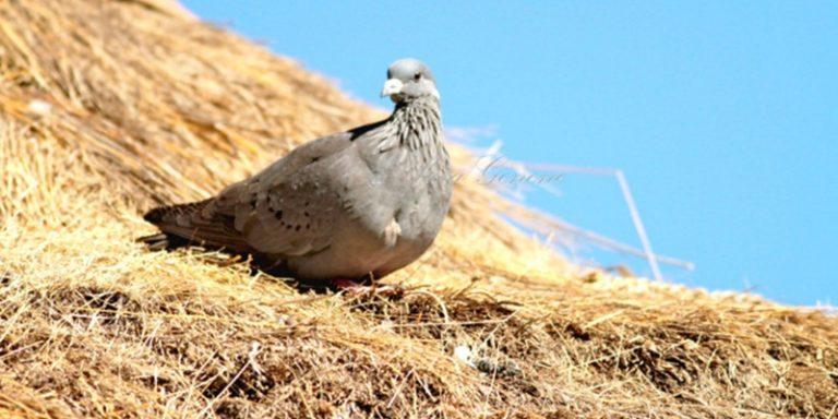 bird-watching-in-ethiopia-1