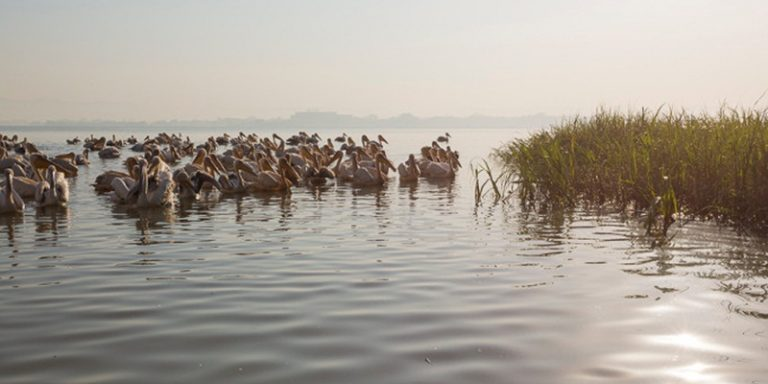 lake tana 2